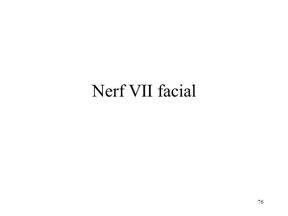 Nerf VII facial
