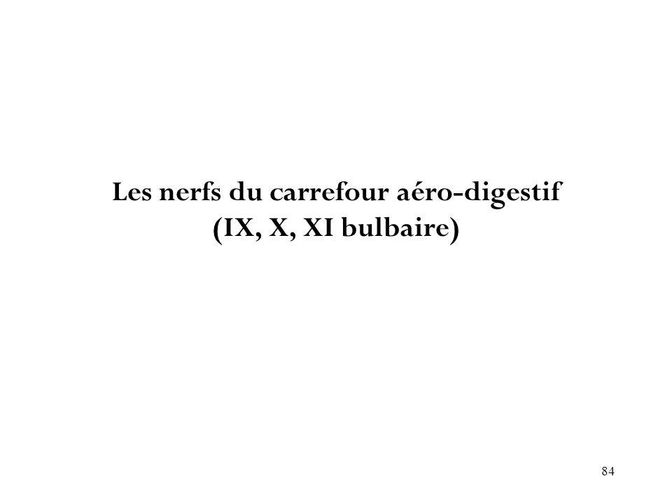 Les nerfs du carrefour aéro-digestif (IX, X, XI bulbaire)