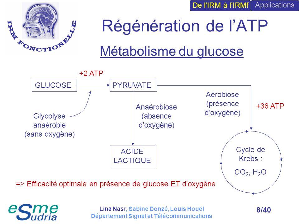 Régénération de l'ATP Métabolisme du glucose De l'IRM à l'IRMf