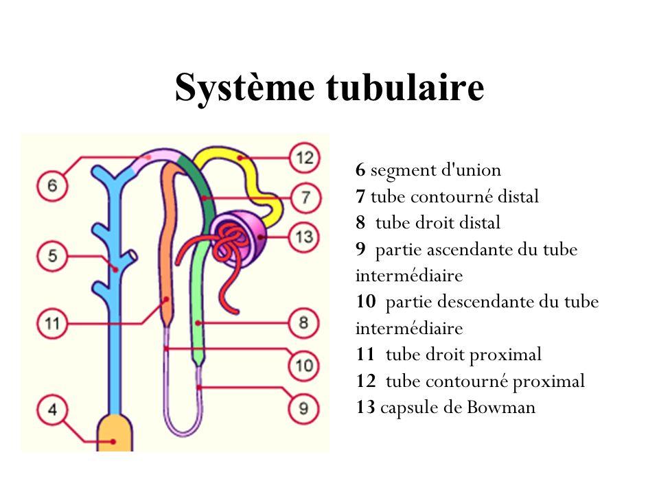 Système tubulaire 6 segment d union