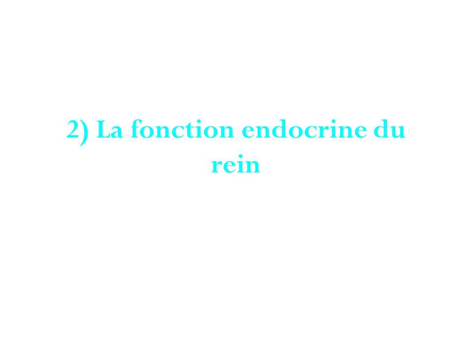 2) La fonction endocrine du rein