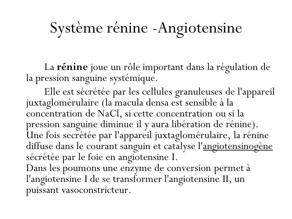 Système rénine -Angiotensine
