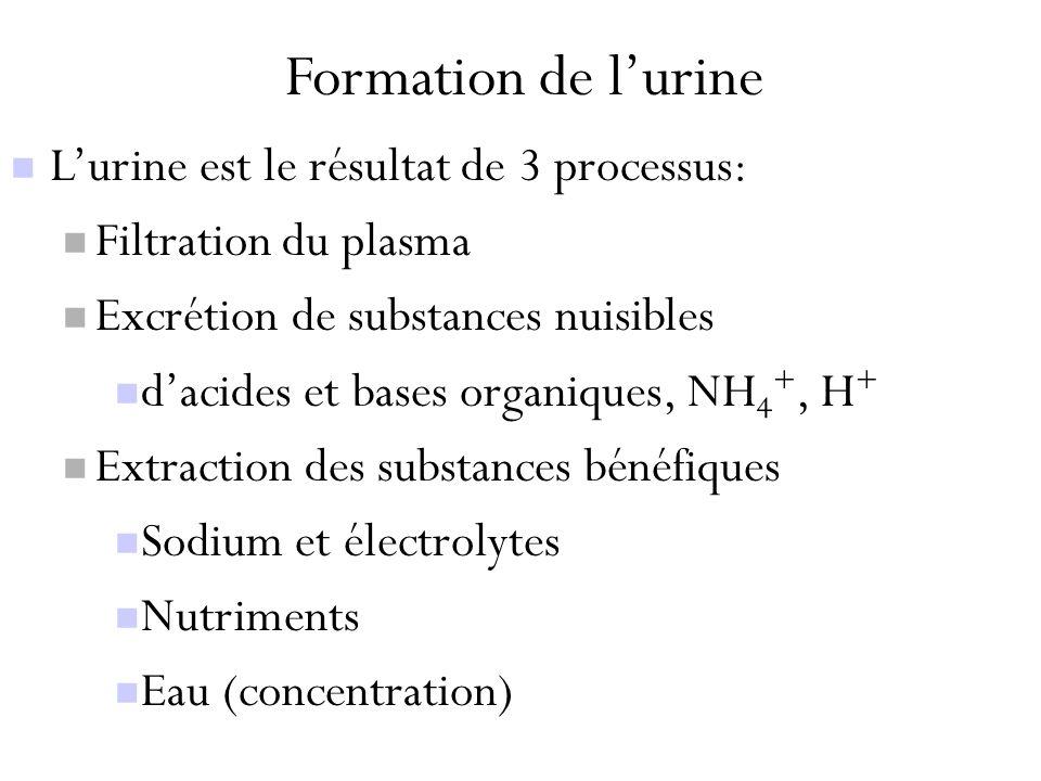 Formation de l'urine L'urine est le résultat de 3 processus:
