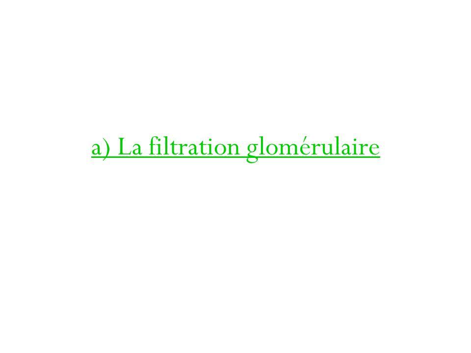 a) La filtration glomérulaire