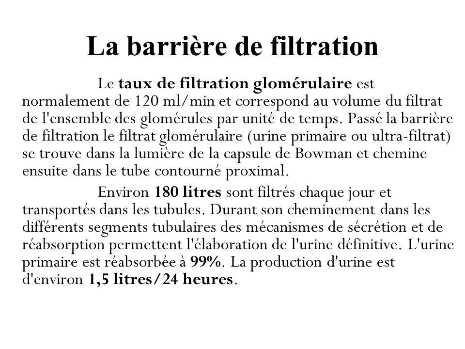 La barrière de filtration
