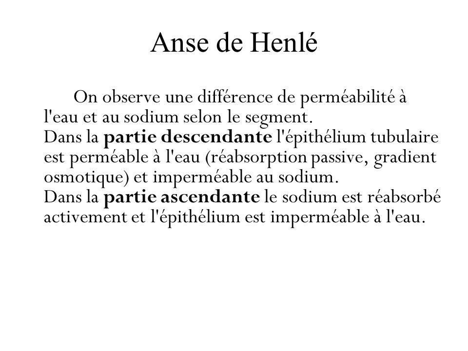 Anse de Henlé