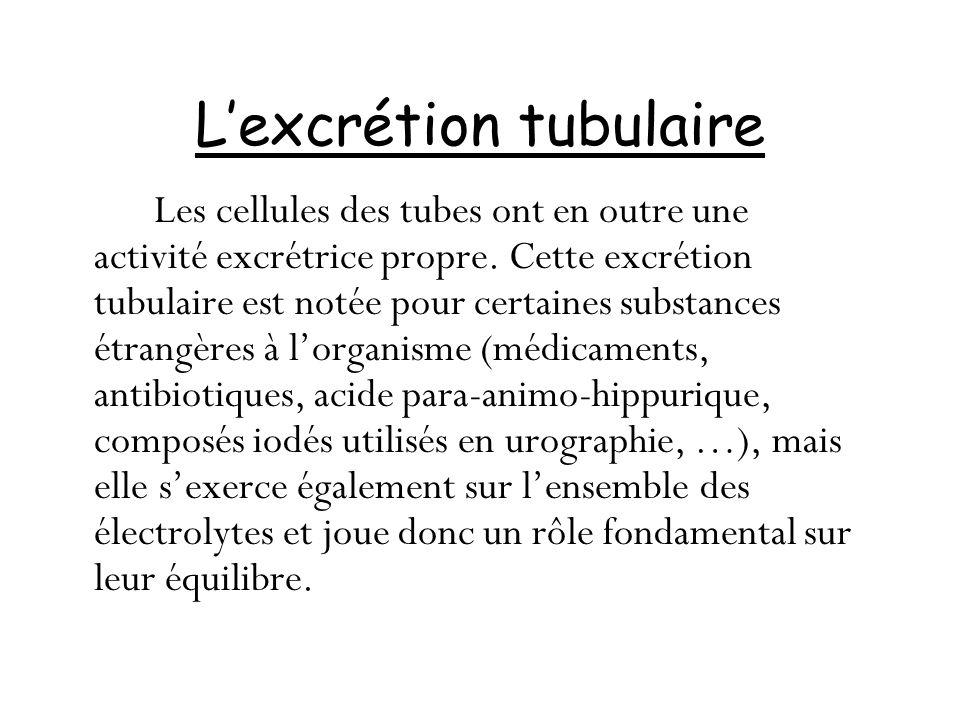 L'excrétion tubulaire