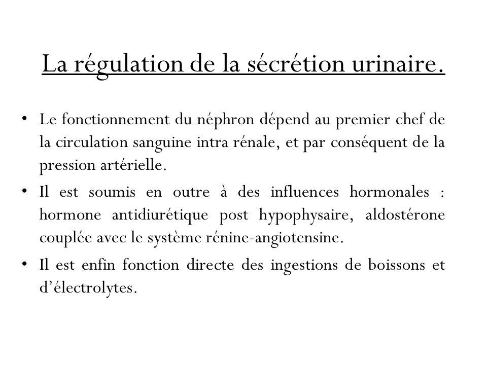 La régulation de la sécrétion urinaire.