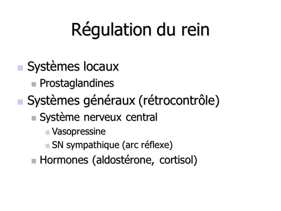 Régulation du rein Systèmes locaux Systèmes généraux (rétrocontrôle)