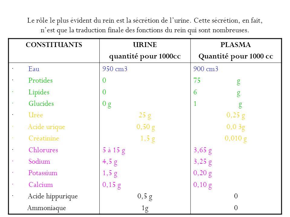 Le rôle le plus évident du rein est la sécrétion de l'urine