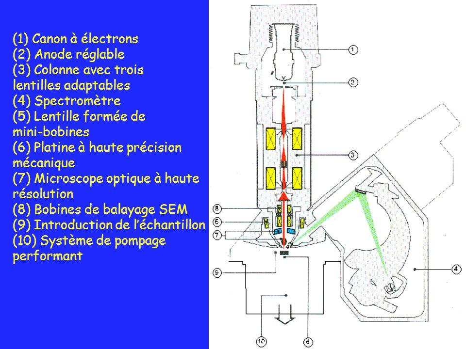 (1) Canon à électrons (2) Anode réglable. (3) Colonne avec trois. lentilles adaptables. (4) Spectromètre.
