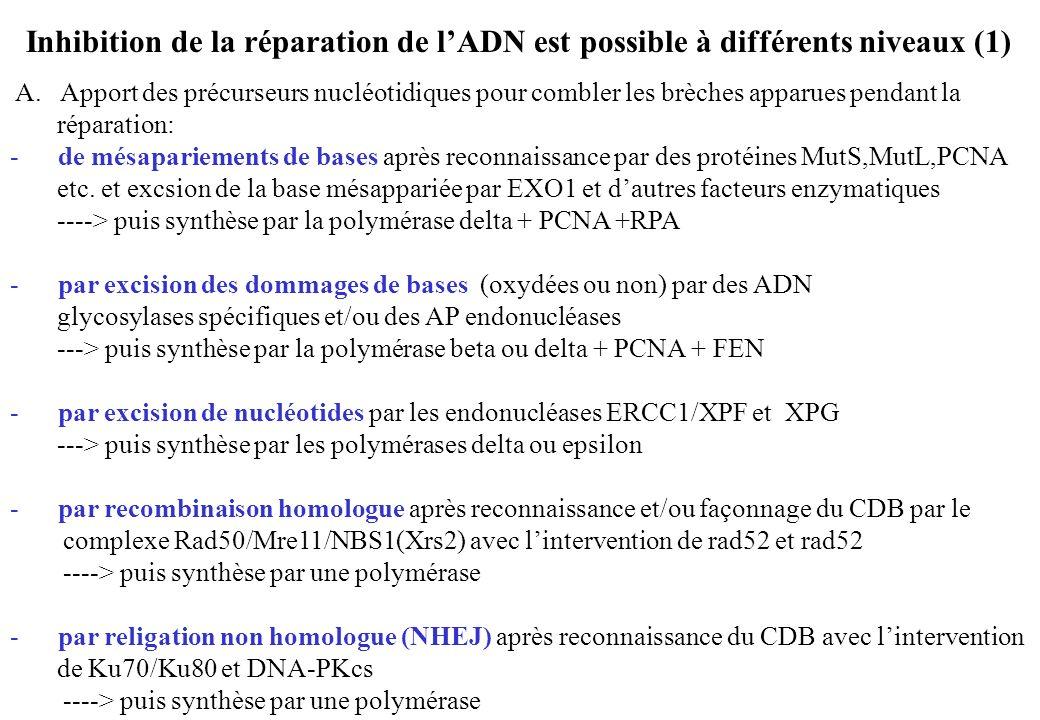 Inhibition de la réparation de l'ADN est possible à différents niveaux (1)