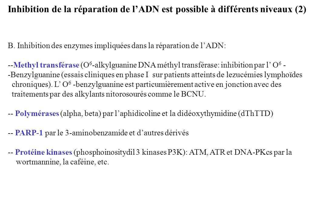 Inhibition de la réparation de l'ADN est possible à différents niveaux (2)