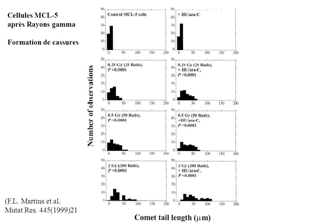 Cellules MCL-5 après Rayons gamma Formation de cassures (F.L. Martins et al. Mutat Res. 445(1999)21