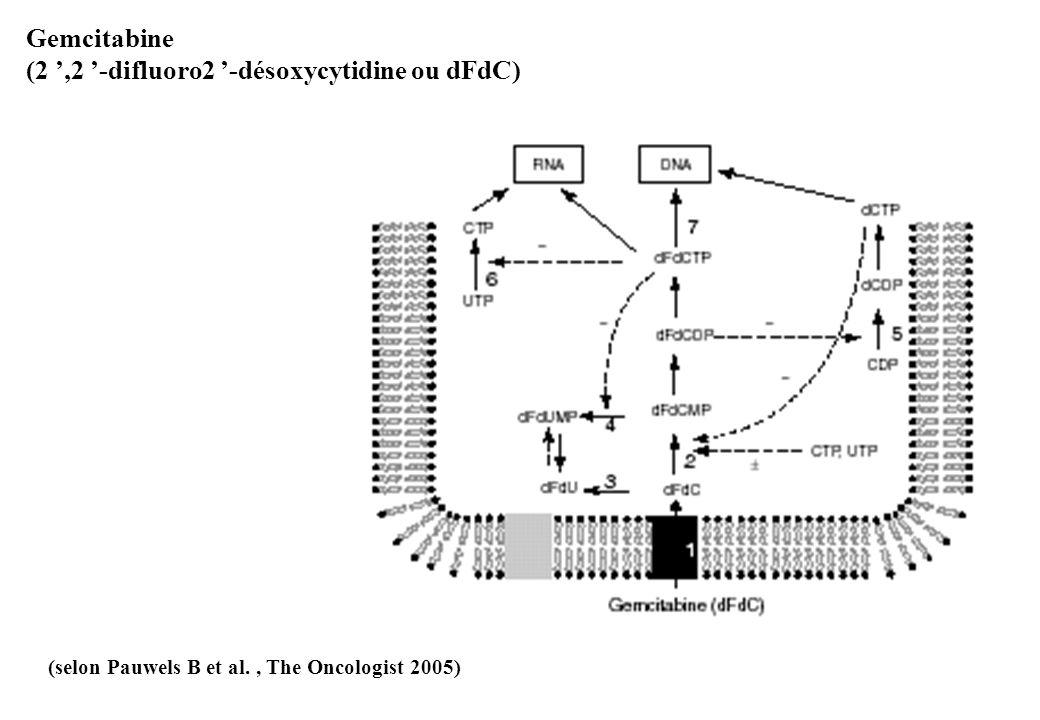 (2 ',2 '-difluoro2 '-désoxycytidine ou dFdC)