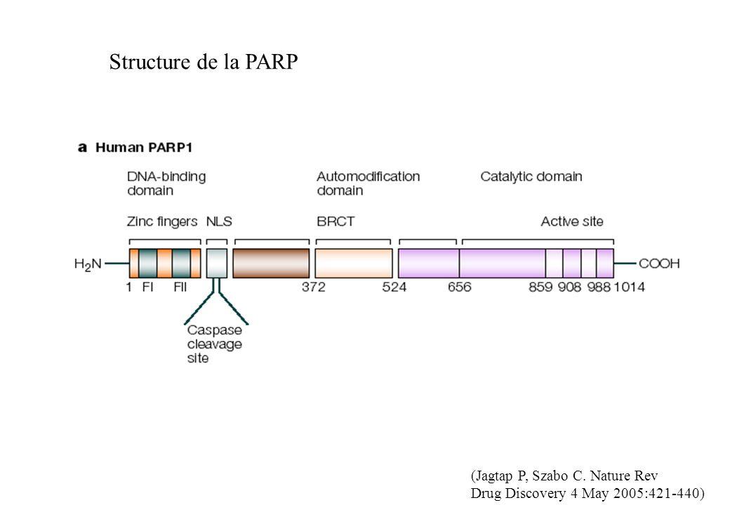 Structure de la PARP (Jagtap P, Szabo C. Nature Rev