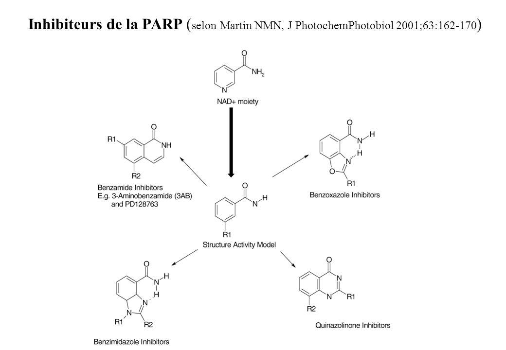 Inhibiteurs de la PARP (selon Martin NMN, J PhotochemPhotobiol 2001;63:162-170)