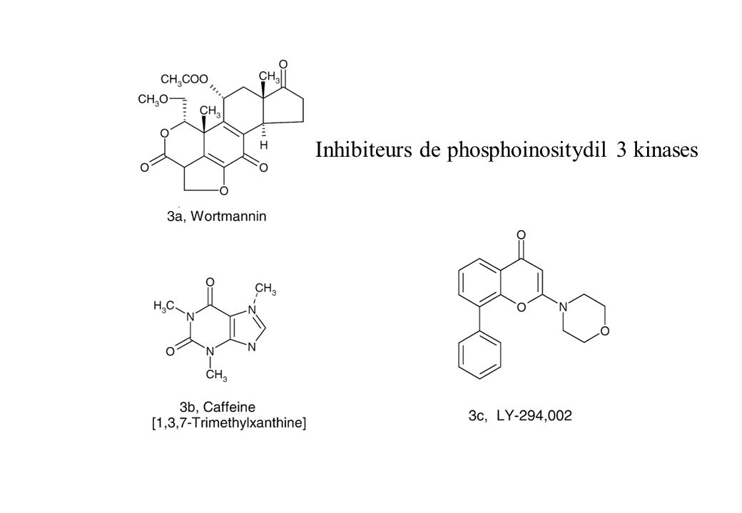 Inhibiteurs de phosphoinositydil 3 kinases