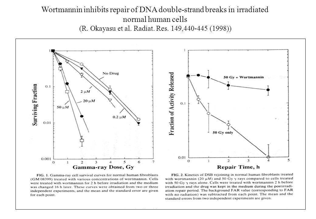 Wortmannin inhibits repair of DNA double-strand breaks in irradiated