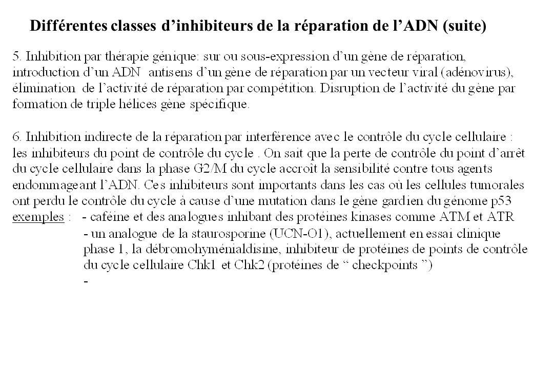 Différentes classes d'inhibiteurs de la réparation de l'ADN (suite)