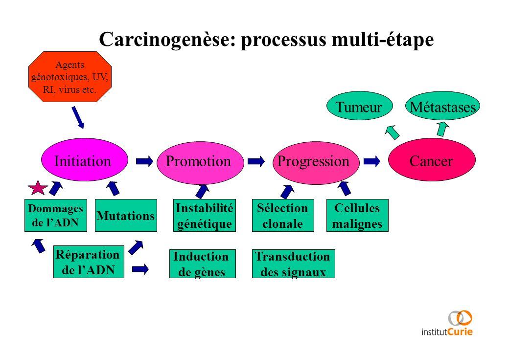 Carcinogenèse: processus multi-étape