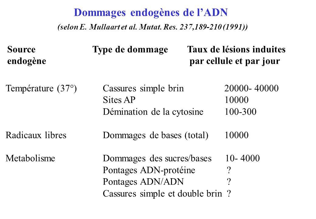 Dommages endogènes de l'ADN