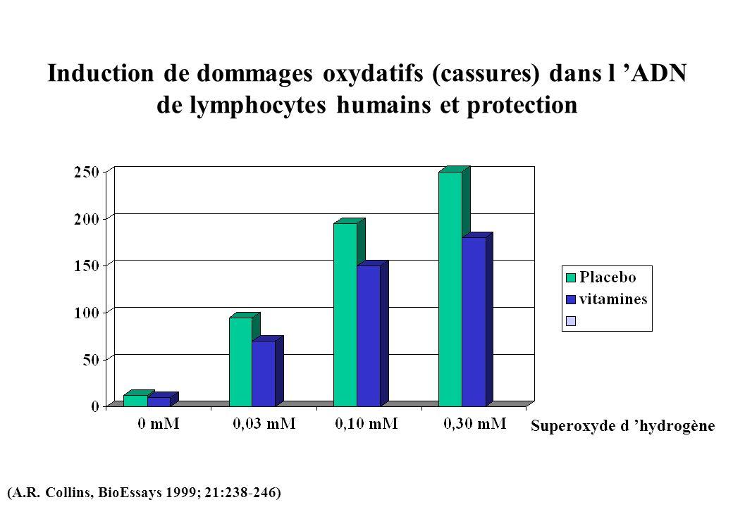 Induction de dommages oxydatifs (cassures) dans l 'ADN de lymphocytes humains et protection