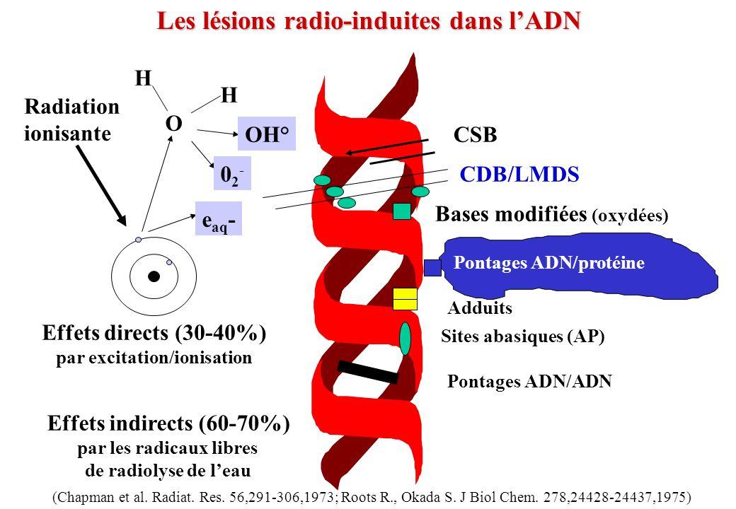 Les lésions radio-induites dans l'ADN