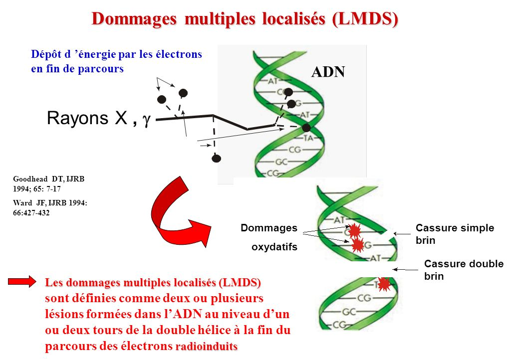Dommages multiples localisés (LMDS)