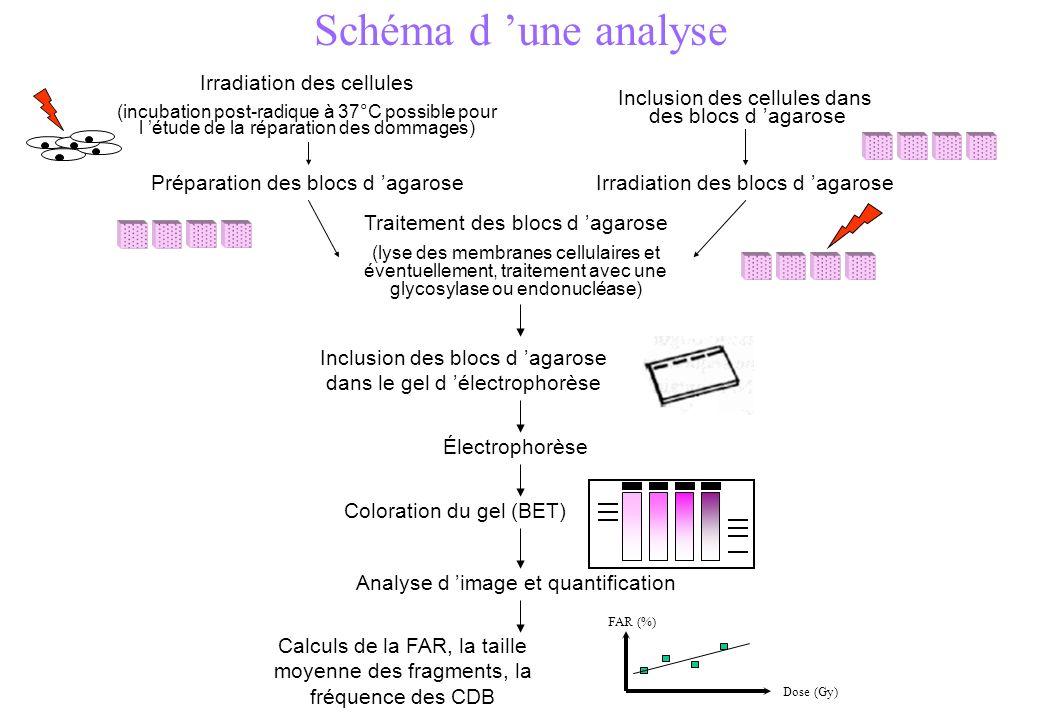Schéma d 'une analyse Irradiation des cellules