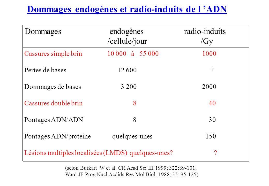 Dommages endogènes et radio-induits de l 'ADN