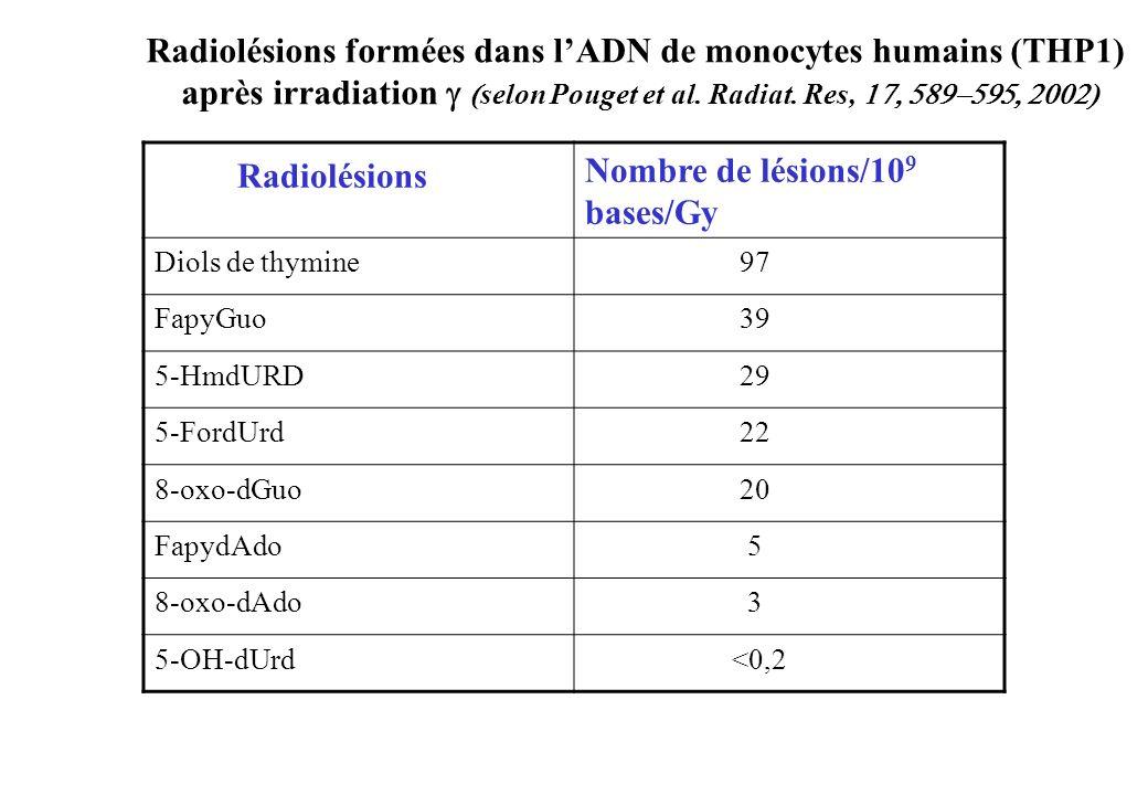 Radiolésions formées dans l'ADN de monocytes humains (THP1)