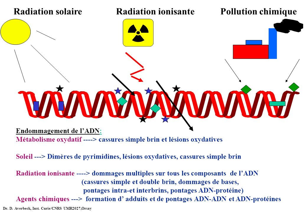 Radiation solaire Radiation ionisante Pollution chimique