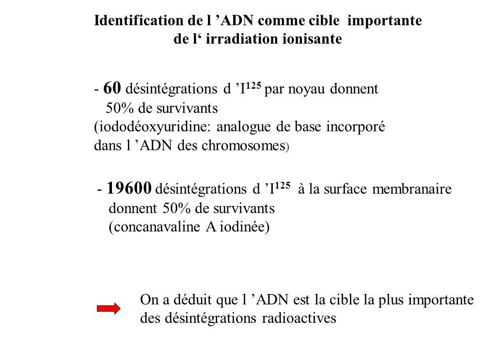 Identification de l 'ADN comme cible importante
