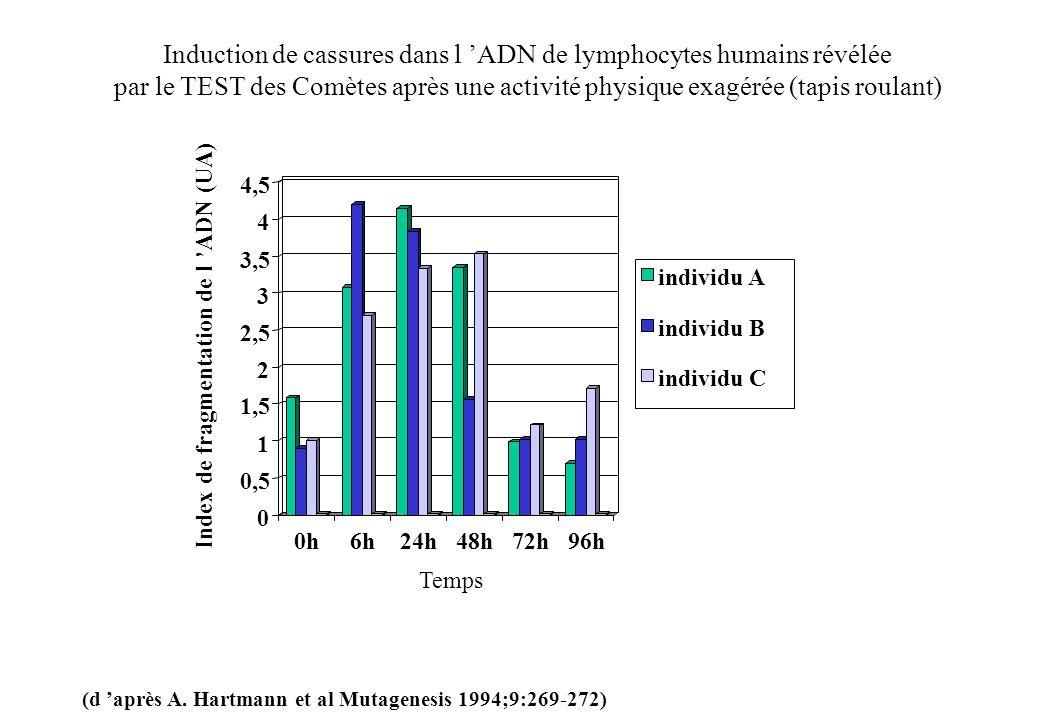 Induction de cassures dans l 'ADN de lymphocytes humains révélée