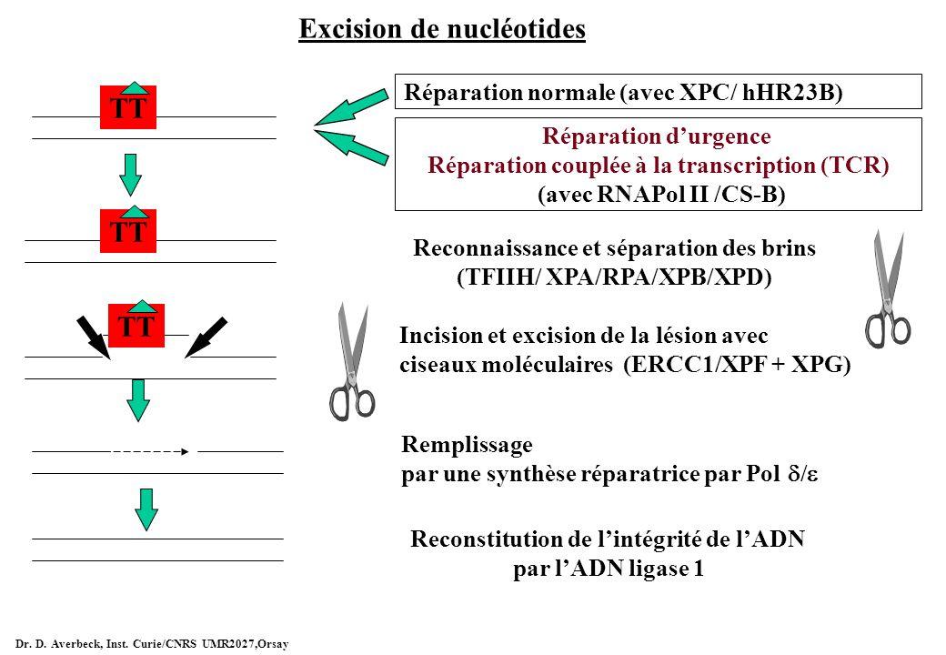 Excision de nucléotides