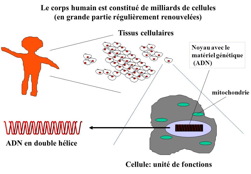 Le corps humain est constitué de milliards de cellules