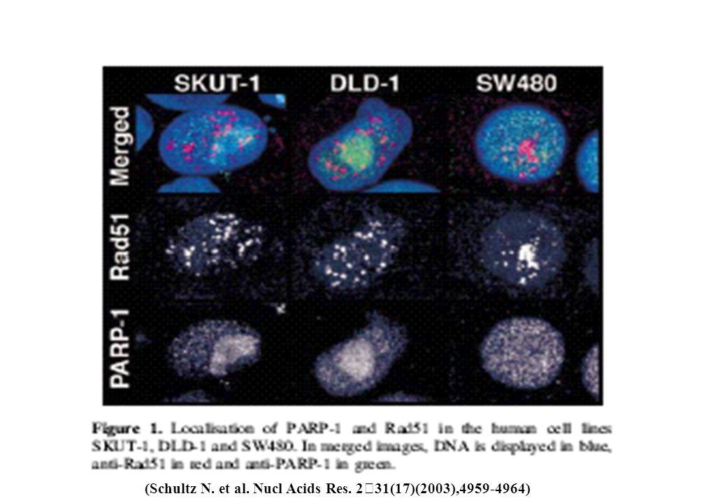 (Schultz N. et al. Nucl Acids Res. 231(17)(2003),4959-4964)