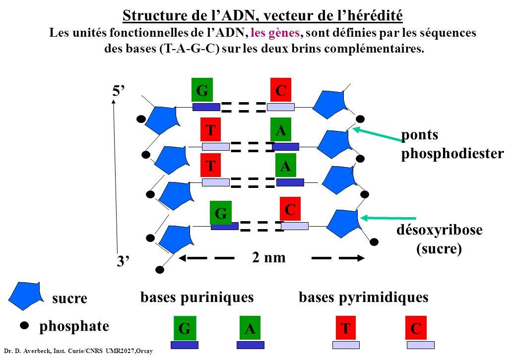 Structure de l'ADN, vecteur de l'hérédité