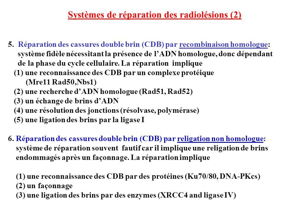 Systèmes de réparation des radiolésions (2)