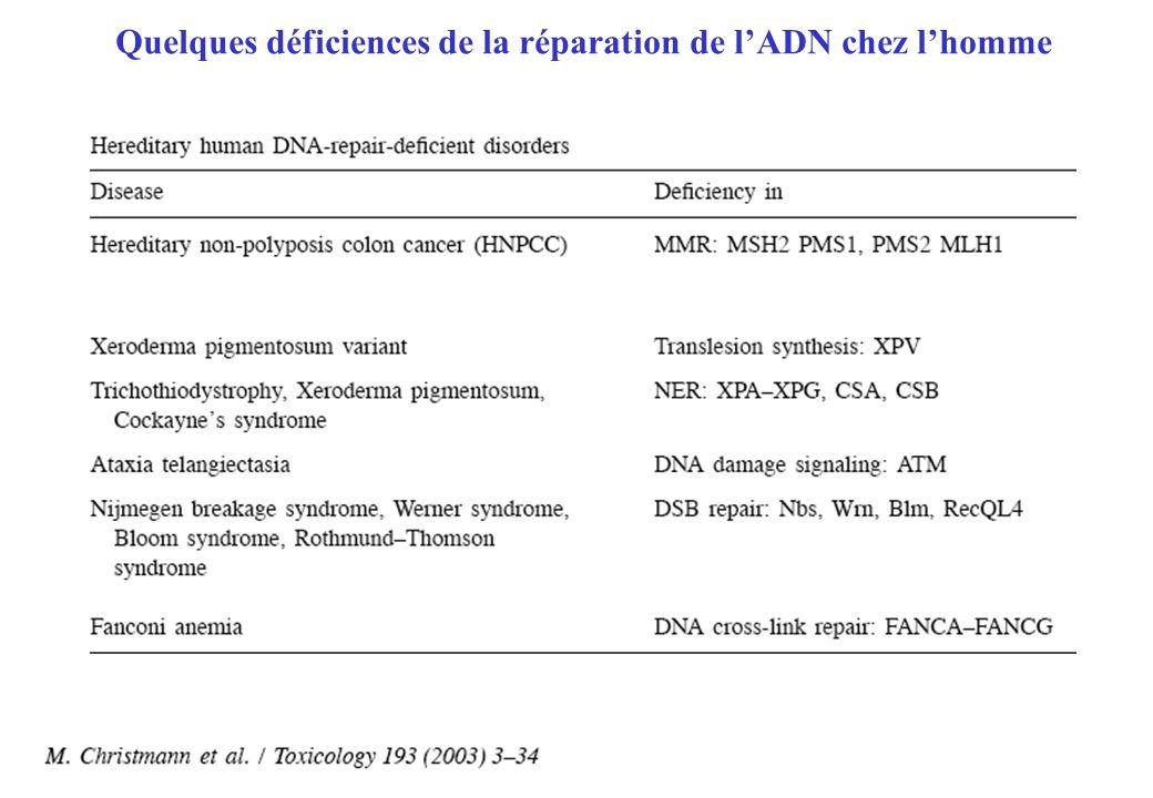 Quelques déficiences de la réparation de l'ADN chez l'homme