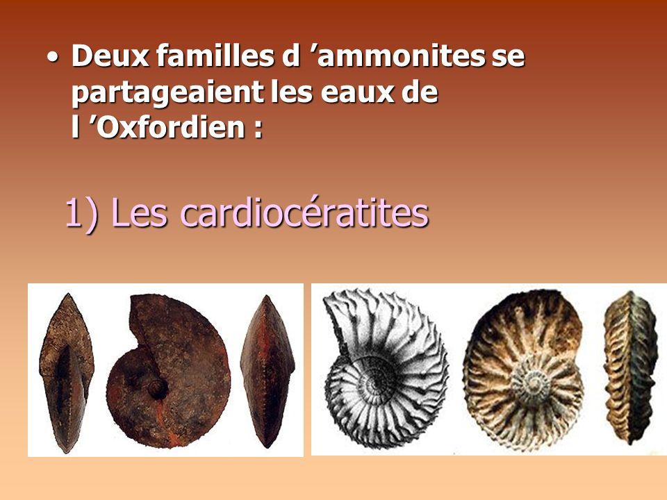 Deux familles d 'ammonites se partageaient les eaux de l 'Oxfordien :