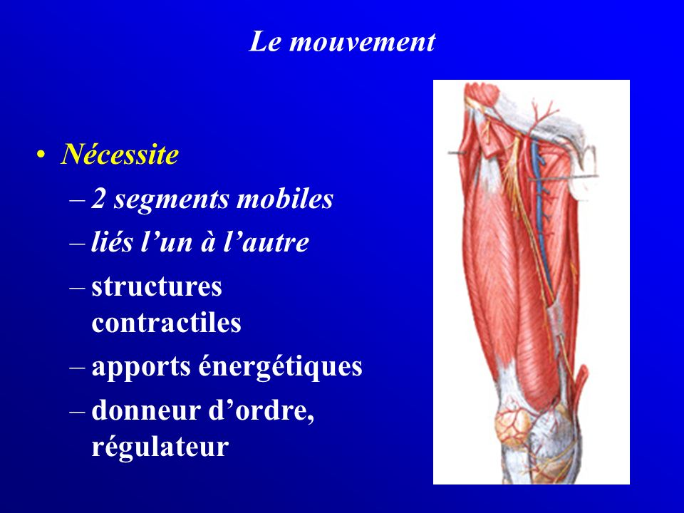 Le mouvement Nécessite. 2 segments mobiles. liés l'un à l'autre. structures contractiles. apports énergétiques.