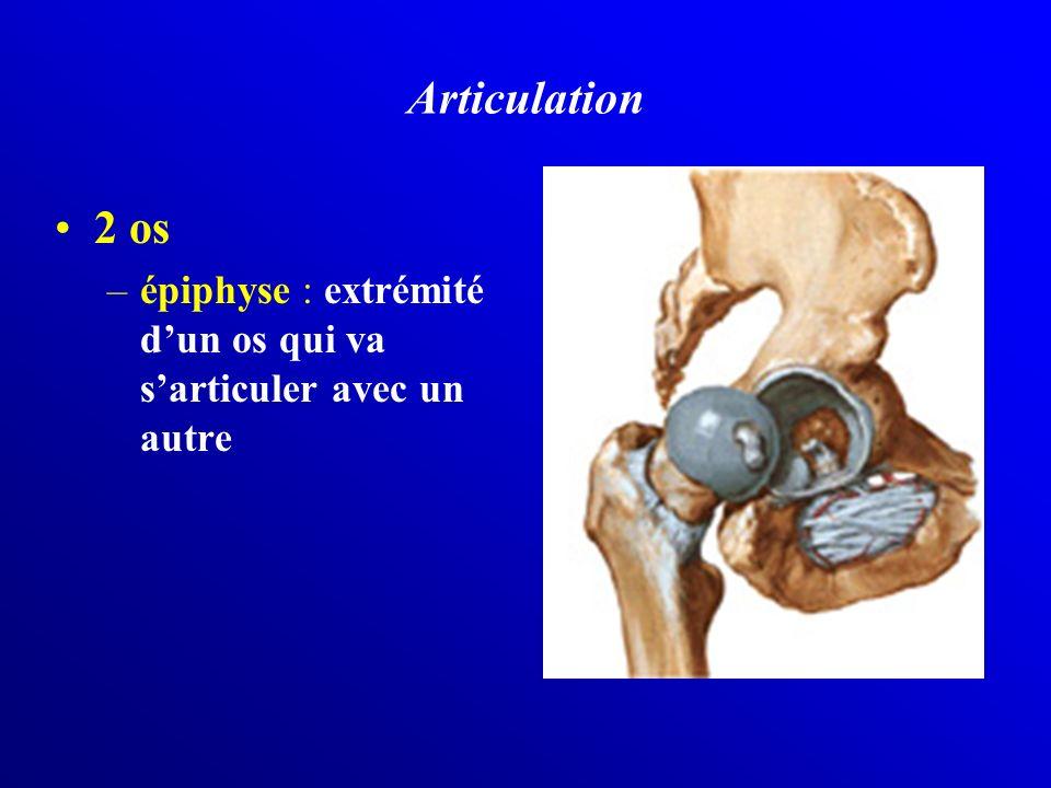Articulation 2 os épiphyse : extrémité d'un os qui va s'articuler avec un autre