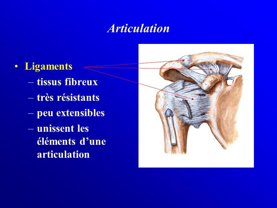 Articulation Ligaments tissus fibreux très résistants peu extensibles