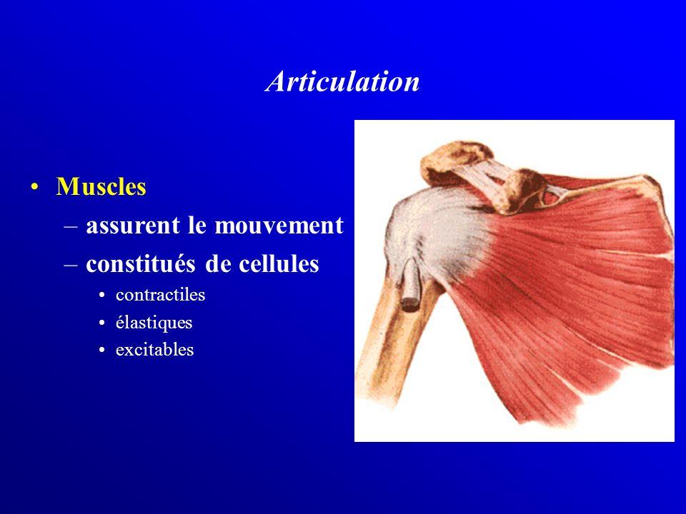 Articulation Muscles assurent le mouvement constitués de cellules