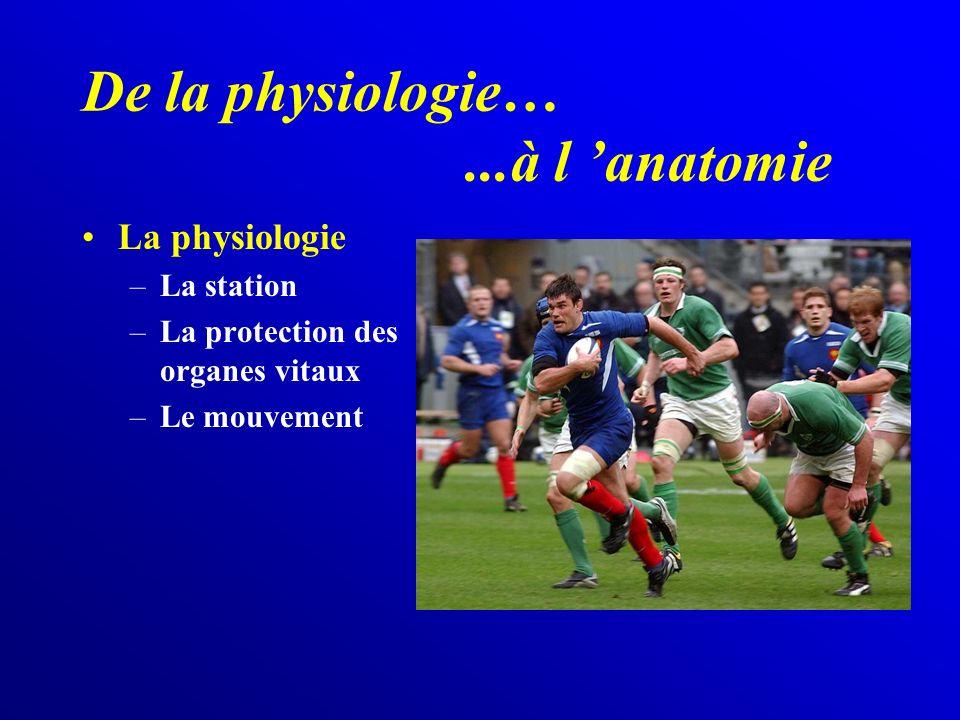 De la physiologie… ...à l 'anatomie