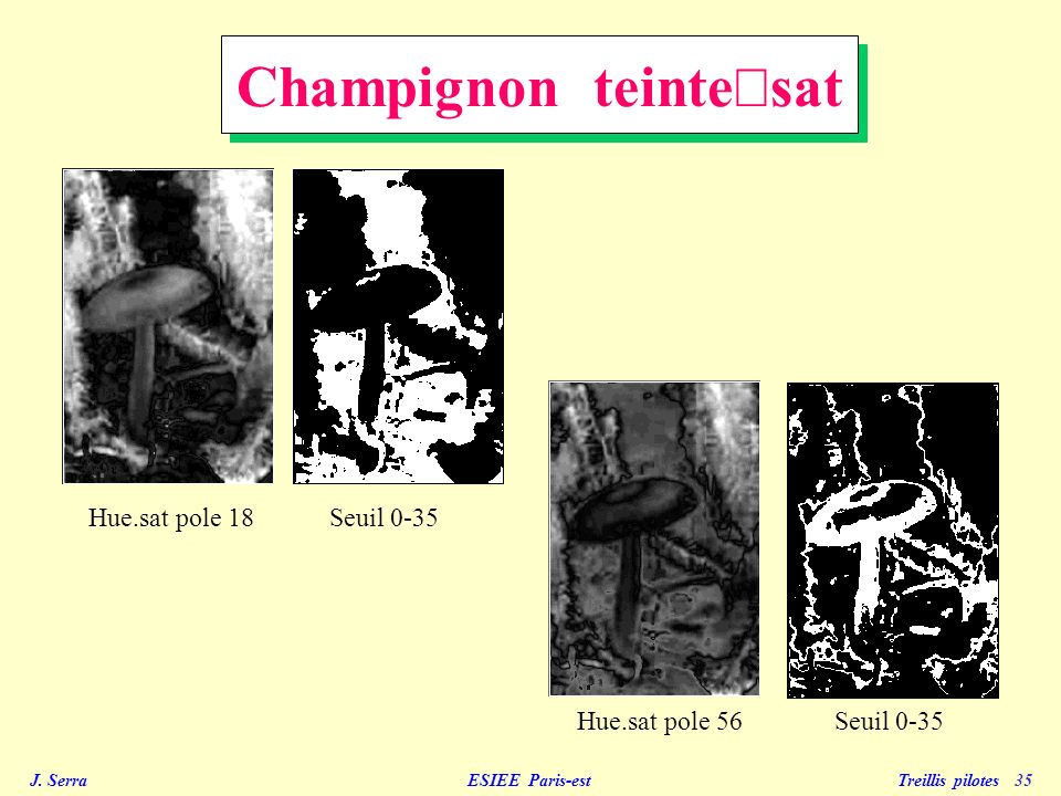 Champignon teinte´sat