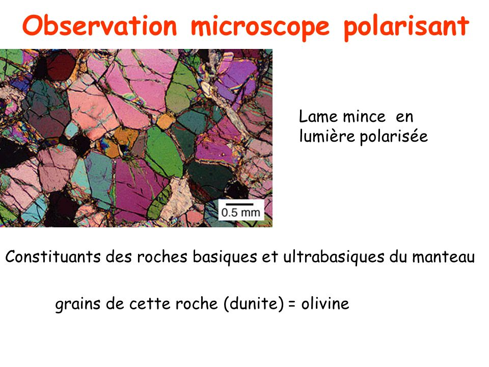 Observation microscope polarisant