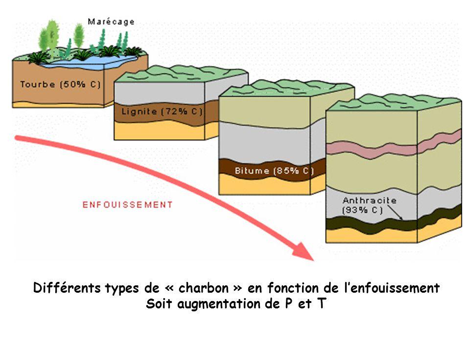 Différents types de « charbon » en fonction de l'enfouissement